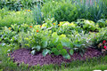 Organic Vegetable Garden Bed