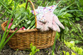 Organic vegetables basket.Gardening Royalty Free Stock Photo