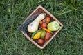 Organic vegetables basket Royalty Free Stock Photo