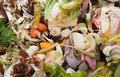 Organic waste Royalty Free Stock Photo