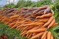Organically Grown Carrots Stock Photography