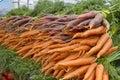 Organically Grown Carrots
