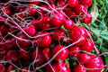 Organically grown radish