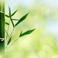 Oriental abstract backgrounds with bamboo grass Royalty Free Stock Photo
