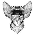 Oriental cat with big ears Hockey image Wild animal wearing hockey helmet Sport animal Winter sport Hockey sport