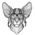 Oriental cat with big ears wearing biker helmet Animal with motorcycle leather helmet Vintage helmet for bikers Aviator