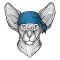 Oriental cat with big ears Wild animal wearing bandana or kerchief or bandanna Image for Pirate Seaman Sailor Biker