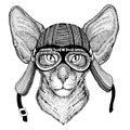 Oriental cat with big ears Wild animal wearing biker motorcycle aviator fly club helmet Illustration for tattoo, emblem