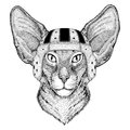 Oriental cat with big ears Wild animal wearing rugby helmet Sport illustration