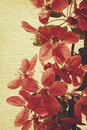 Oriental grungy floral backgrounds with real rice paper texture Stock Photo