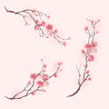 Oriental style painting cherry blossom in spring flowers three different compositions Royalty Free Stock Photo