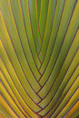 Origin the of banana leaves Stock Photos