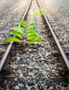 Origin tree in railroad small the Royalty Free Stock Photography