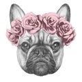 Original drawing of French Bulldog with roses.
