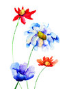 Original flowers illustration watercolor of Stock Photos