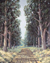 Original oil painting on canvas - Lane of sun-dappled tall eucal