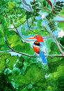 Original painting of a beautiful Kingfisher Royalty Free Stock Images