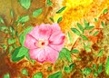 Original painting of a beautiful pink rose, a child art Stock Photo