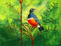 Original painting of a beautiful superb starling acrylic Royalty Free Stock Photography