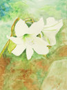 Original painting of white lily, a child art Stock Image