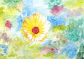 Original painting of yellowish white Calendula Stock Photography