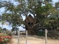Original tree house in vanuatu lénakel village tanna island Stock Image