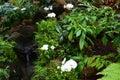 Orkidér landskap på arboretumen Royaltyfri Foto