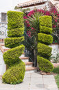 Ornamental cypress trees