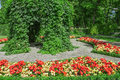 Ornamental garden with blooming begonias red and yellow Stock Photography