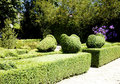 Ornamental garden with sculpted hedges beautiful Royalty Free Stock Images