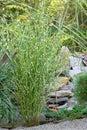 Ornamental grasses Royalty Free Stock Photo