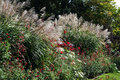 Ornamental grasses when the bloom are in garden especially beautiful in autumn there are different types of Stock Photos