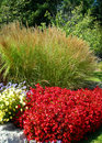 Ornamental green grass and red flower beds formal garden landscape with lush Stock Photo