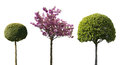 Ornamental isolated trees three on white background Stock Photography