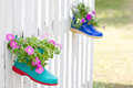 Ornamental petunia flowers plant in shoes hanging on fance Stock Photo