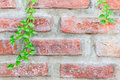Ornamental plants on brick wall Stock Photo