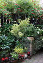Ornamental plants in pots for a shady can also be grown part of the terrace or balcony if the position of the shadow choose that Royalty Free Stock Photo