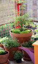 Ornamental pot plants on the balcony and herbs small Royalty Free Stock Photos