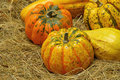 Ornamental pumkin 04 Royalty Free Stock Photo
