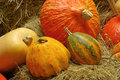 Ornamental pumkin 05 Royalty Free Stock Photo