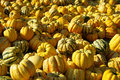 Ornamental pumkin Royalty Free Stock Image