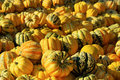 Ornamental pumkin Royalty Free Stock Photo