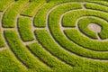 Ornemental garden Royalty Free Stock Photo