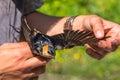 Ornithologist examines bird
