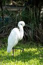 Ornithology and freedom concept Royalty Free Stock Photo