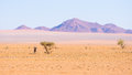 Oryx resting under shadow of Acacia tree in the colorful Namib desert of the majestic Namib Naukluft National Park, best travel de Royalty Free Stock Photo