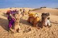 Os povos locais e seu camelo descansam no deserto de thar Fotos de Stock