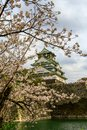 stock image of  Osaka Castle and cherry blossom in spring, Osaka, Japan.