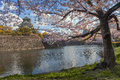 Osaka castle with the cherry blossoms in spring Royalty Free Stock Photography