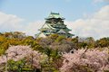 Osaka castle with the cherry blossoms in spring Royalty Free Stock Image